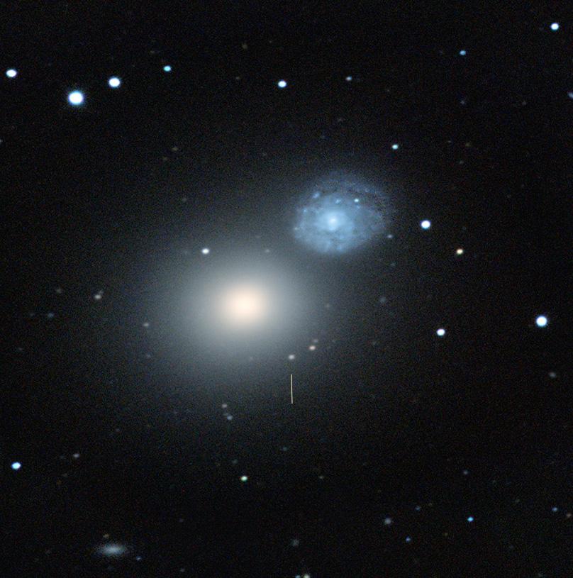 Die elliptische Galaxie M60 und die benachbarte Spirale NGC4647. An der bezeichneten Stelle findet sich M60-UCD1, der unverdauliche Kern einer Galaxie, die vor einigen Milliarden Jahren von M60 eingefangen, zerrissen und verschluckt wurde. 160 Lj im Durchmesser, 140 Millionen Sonnenmassen schwer, 100 Sterne pro Kubik-Lj, eigenes Schwarzes Loch (5x schwerer als das unsrer Milchstraße), das vermutlich das Überleben gesichert hat. M60 selber beherbergt ein schwarzes Loch, das mit 4.5 Milliarden Sonnemassen, dem weltberühmten Monster in M87 (6.5 Milliarde) ziemlich nahe kommt.